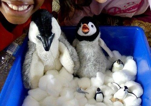 Penguin Sensory Bin