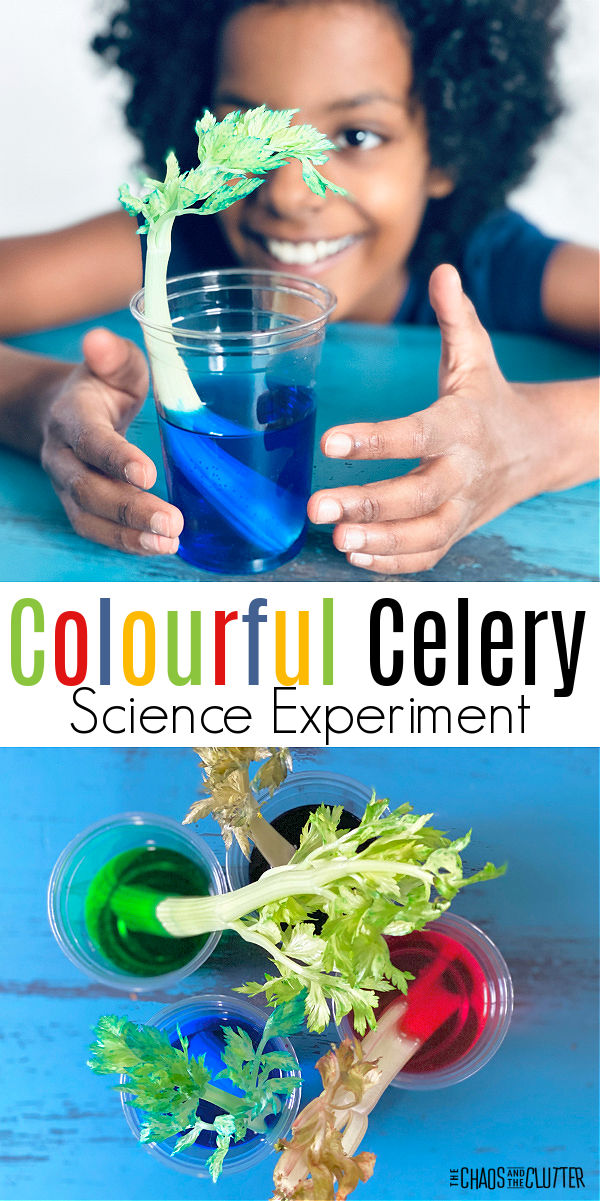 "a girl smiles as she looks at a blue celery stalk in blue water. Other colours of celery are visible. Text reads ""Colourful Celery Science Experiment"""