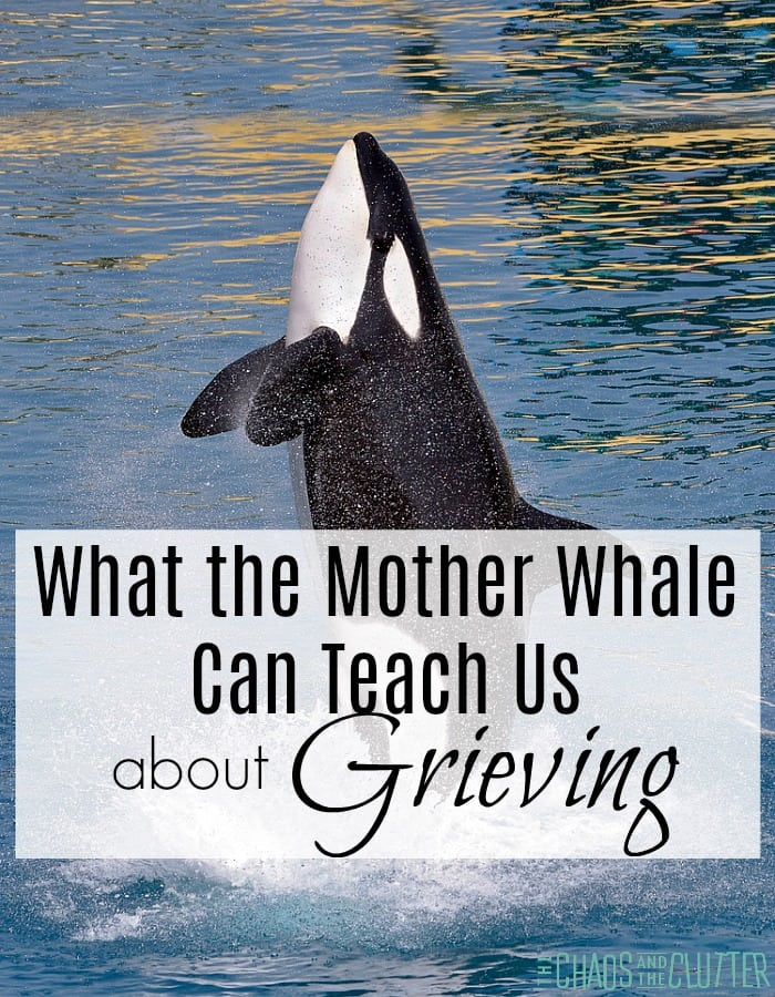 What the Mother Whale can teach us about Grieving #griefandloss #parenting #grieving