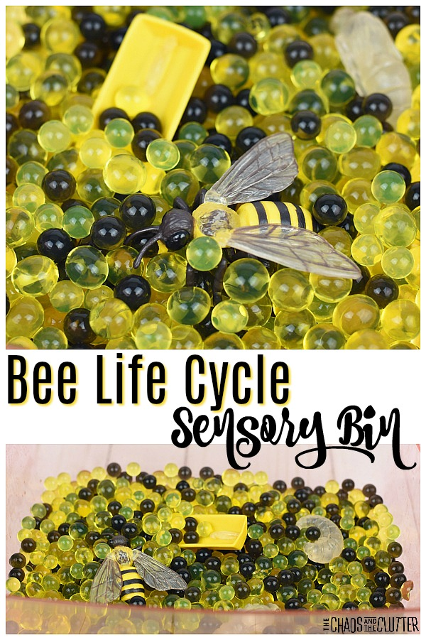 Bee Life Cycle Sensory Bin #sensorybin #sensoryplay #beelifecycle #kidsactivities #science