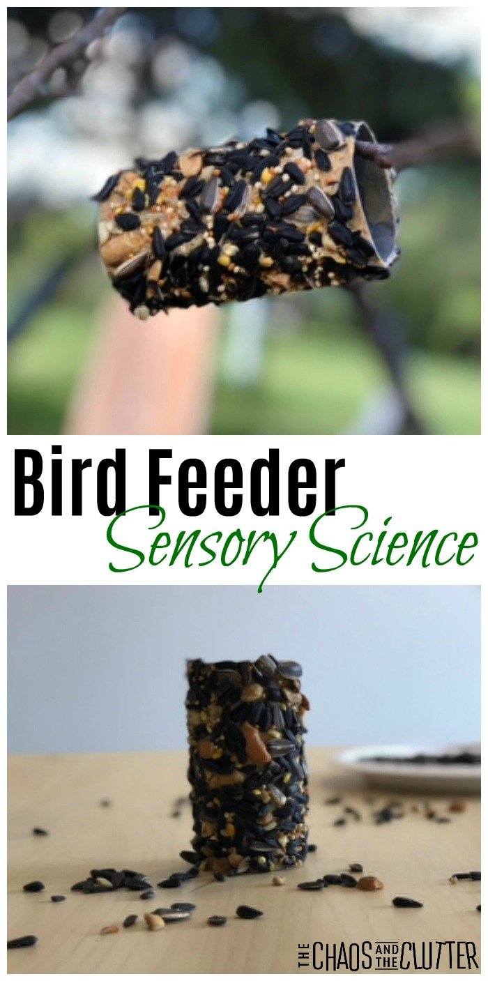 Bird Feeder Sensory Science #sensoryplay #sensory #sensoryscience #science #toiletpaperrollcrafts