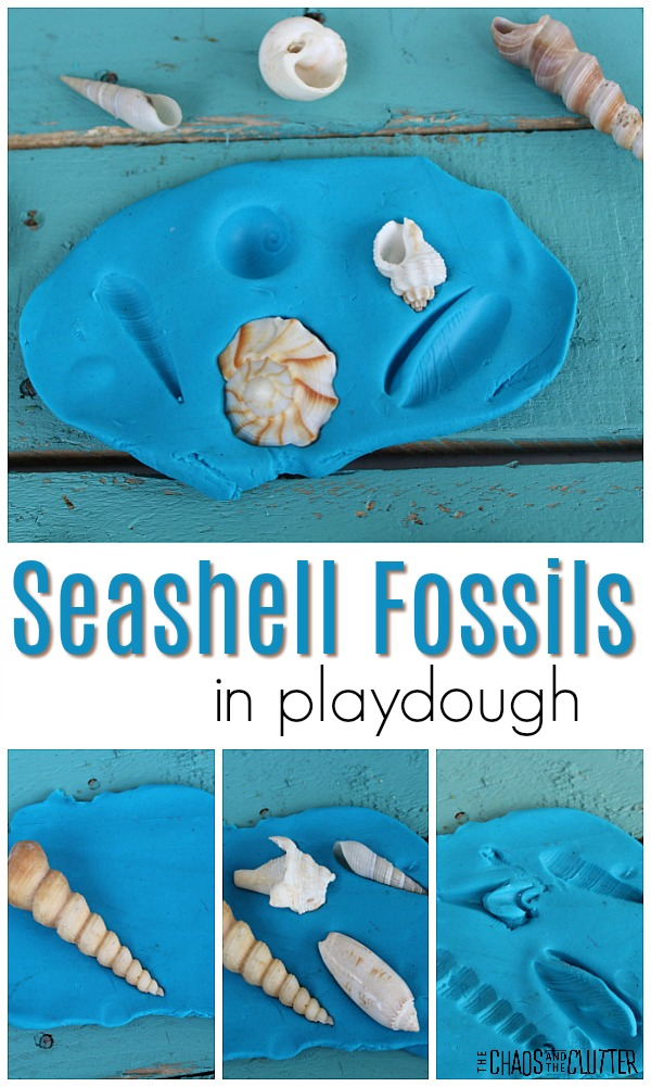 "blue playdough on a teal surface has some seashells pressed into it and a few seashells nearby. The text shown is ""seashell fossils in playdough"""