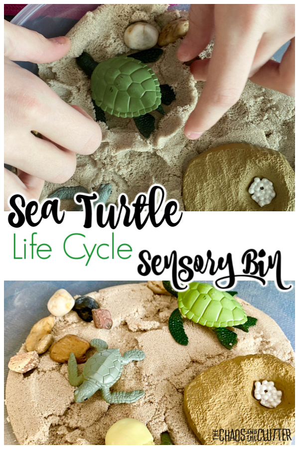 "small hands explore in sand with plastic figures and rocks and text that reads ""Sea Turtle Life Cycle Sensory Bin"""