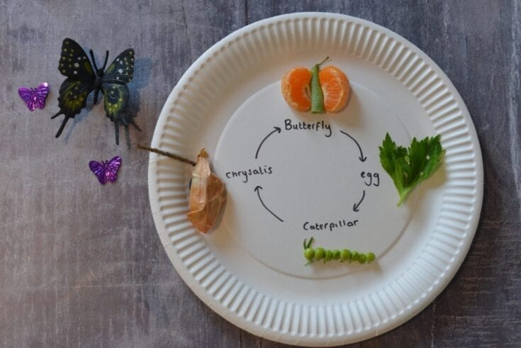 Edible Butterfly Life Cycle - Life Cycles