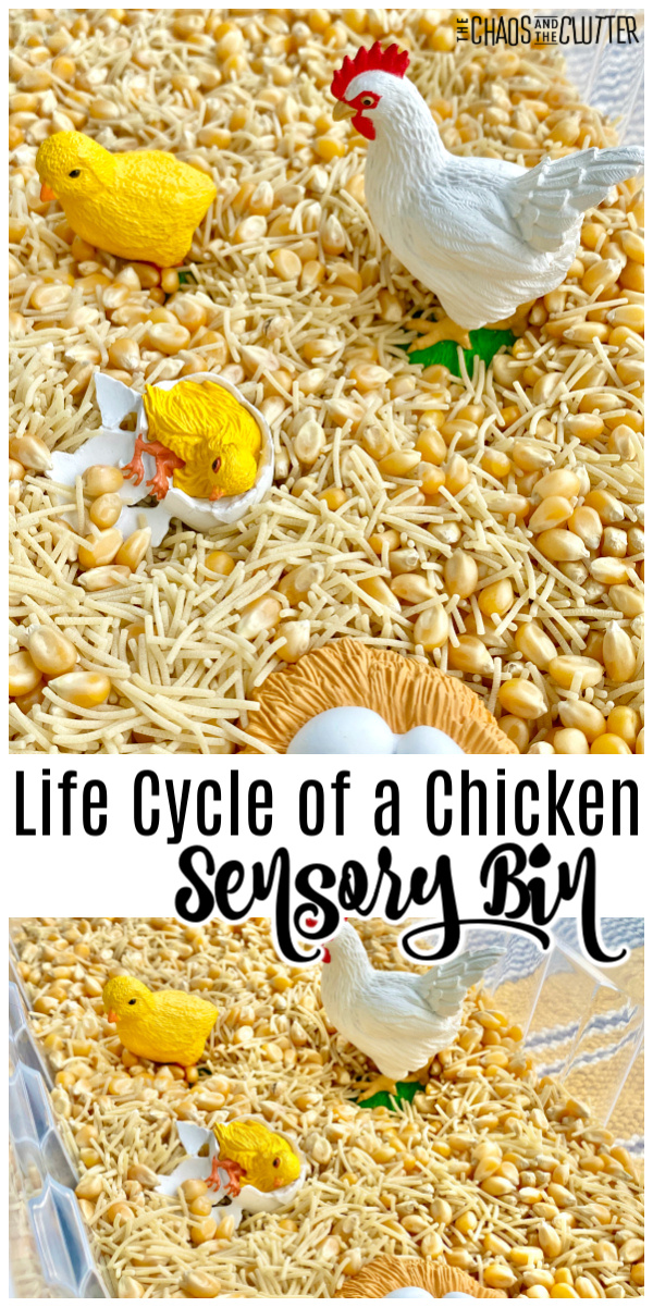 "popcorn seeds, dry noodles, chicken, egg, chicks. Text reads ""Life Cycle of a Chicken Sensory Bin"""