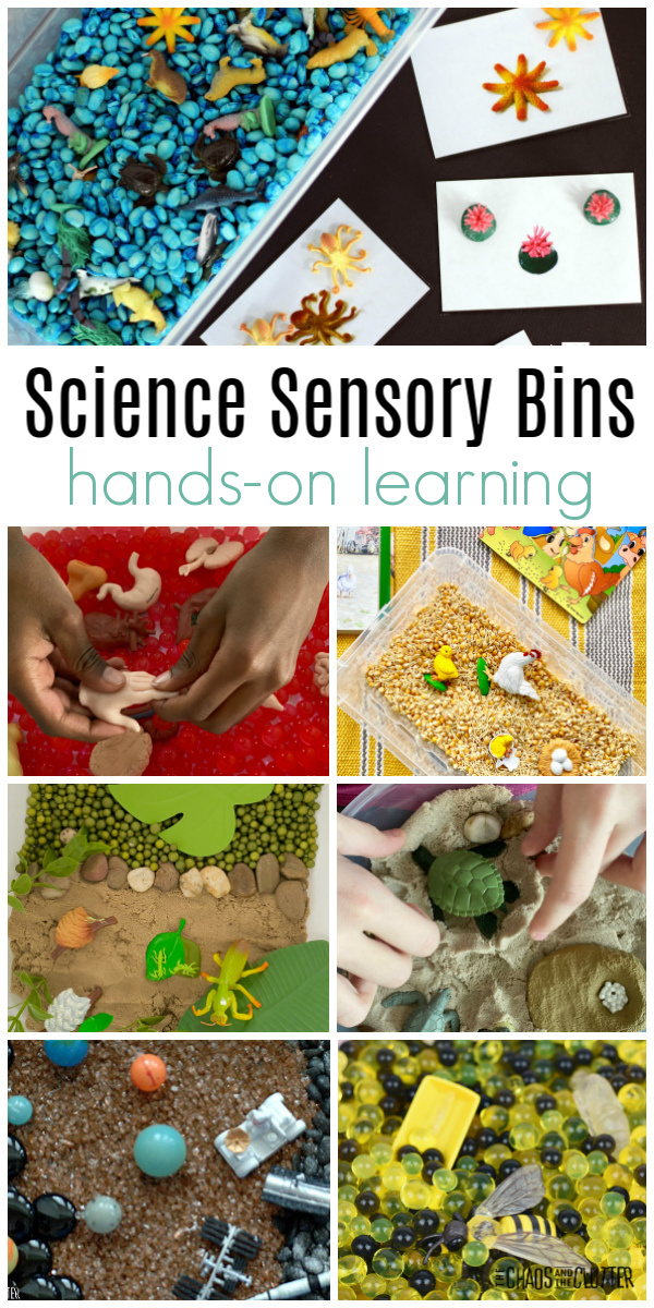 "collage of images with text that reads ""Science Sensory Bins hands-on learning"""
