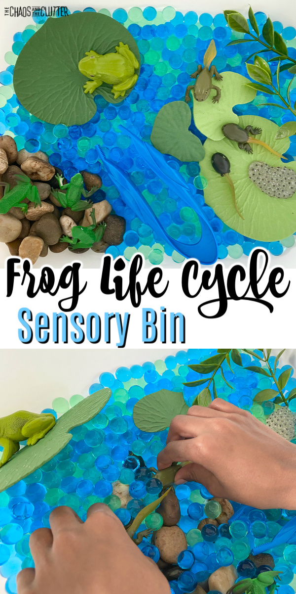 "blue water beads with foam lily pads, rocks, and frogs. Text reads ""Frog Life Cycle Sensory Bin"""