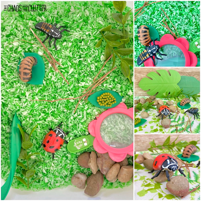 collage of photos of a sensory bin of green rice and ladybug toys