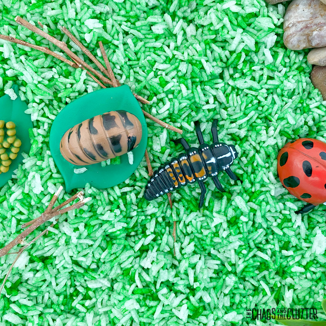 toys of the life stages of ladybugs sitting on dry green rice
