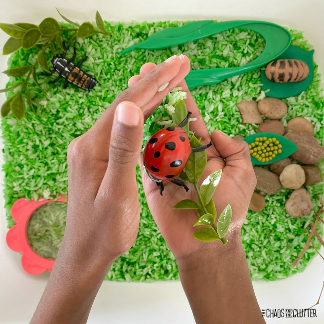 small hands hold a plastic ladybug and leaves