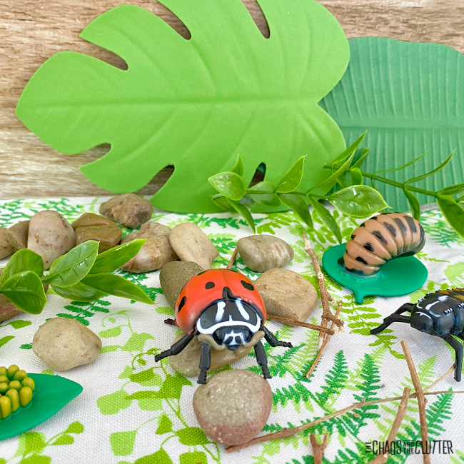 toy leaves and ladybugs next to rocks